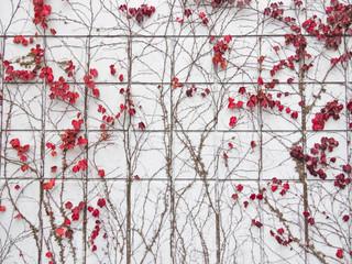 壁をつたう植物