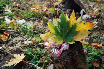 Bouquet of autumn maple leaves