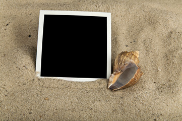 photography and seashells