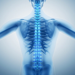 Human backbone
