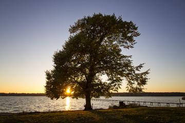 Wall Mural - Baum im Sonnenuntergang