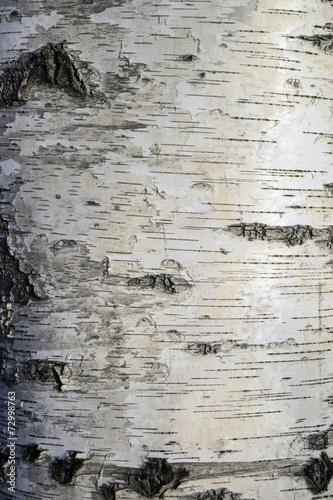 Wall mural Birch trunk