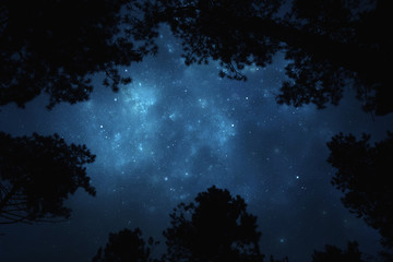 Night starry sky trough trees