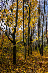 autumn walks in park