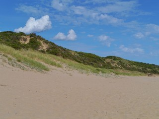 The beach and the dunes with vegetation of Cape Otway