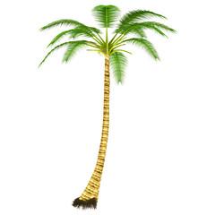 Cocos Tree