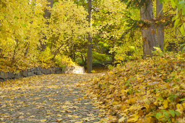 Autumn forest road with maple leaves