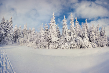 Sunny winter landscape in the mountain forest