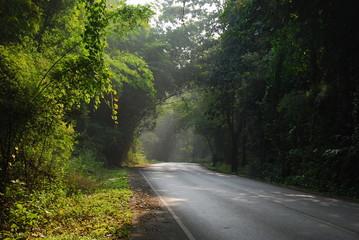 northern forest thailand