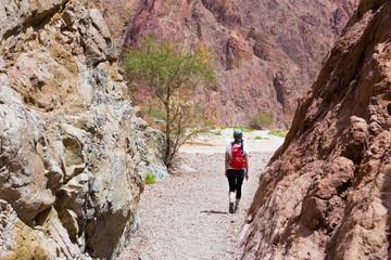 Wall Mural - Woman backpacker walking desert canyon.