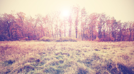 Vintage filtered photo of an autumn field.