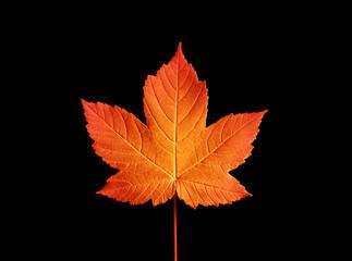 liść jesienny B