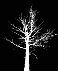 white dry large tree silhouette on black