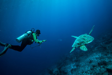 Diver and green sea turtle in Derawan, Kalimantan underwater
