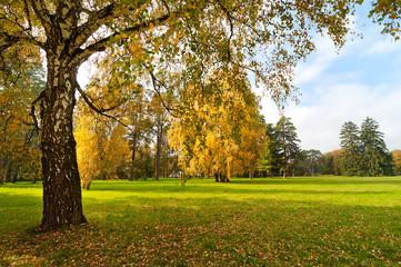 Lawn in the autumn garden