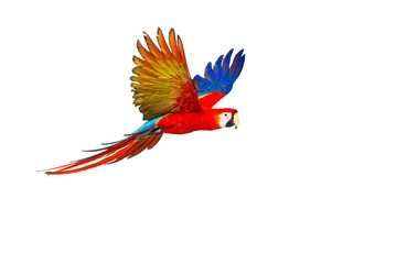 Fotobehang Papegaai Colourful flying parrot isolated on white