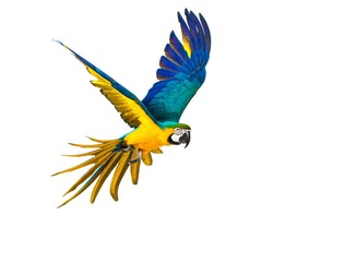 Foto op Plexiglas Papegaai Colourful flying parrot isolated on white