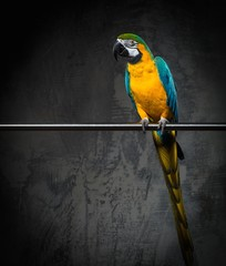 Fototapete - Colourful parrot sitting on a perch