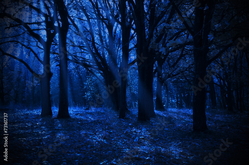 Fototapete Night forest