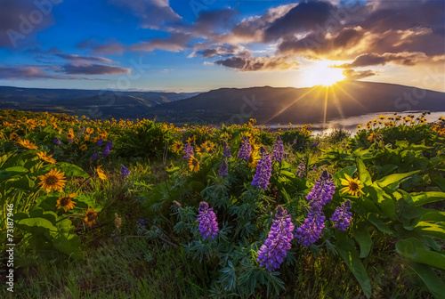 закат лучи солнце цветы горы скачать