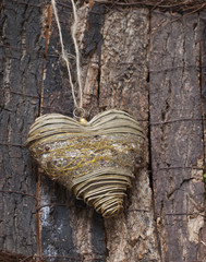Decorative sertse on tree bark