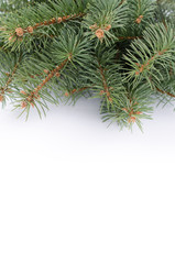 Branch of Christmas tree over white background