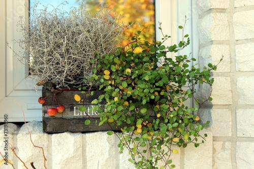 herbst fenster trendy baum ast pflanze blatt blume fenster laub frhling rot farbe herbst flora. Black Bedroom Furniture Sets. Home Design Ideas