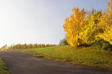 Herbstliche Morgensonne im Weinberg