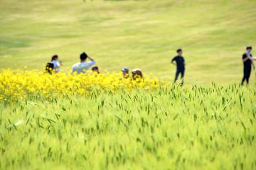 유채꽃과 봄 풍경이미지