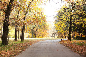 Canvas Prints Autumn Beautiful autumn trees in park
