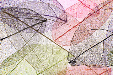 Keuken foto achterwand Decoratief nervenblad Decorative skeleton leaves background