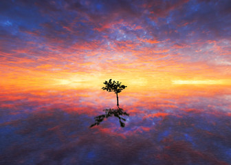 Lonely tree with sunset background