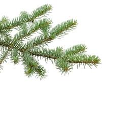 green fir branch for christmas