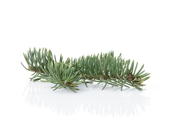 small christmass tree branch