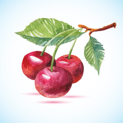 Cherry berry set with leaf.Watercolor hand drawn illustration