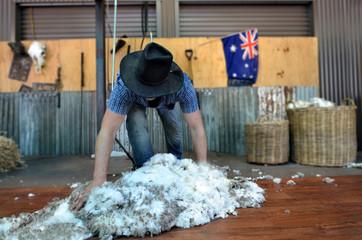 Australian Sheep shearer