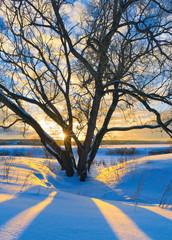 Fototapete - Winter evening