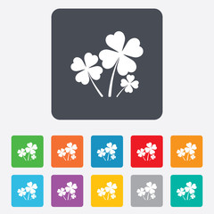 Clovers with four leaves sign. St Patrick symbol
