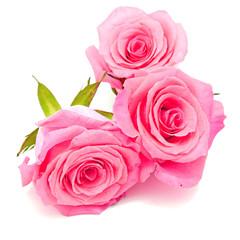 Wall Mural - pink rose