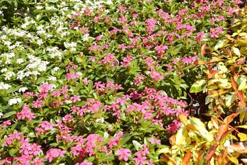 다양한 종류의 봄꽃축제