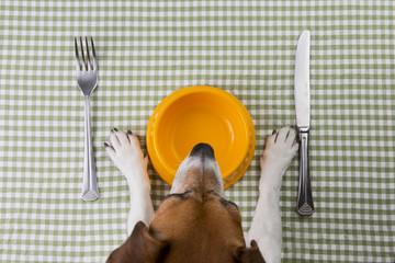 Dog diet Wall mural