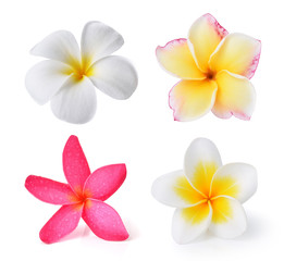 Foto op Canvas Frangipani Frangipani flower isolated on white background