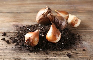 Flower bulbs and soil on wooden background