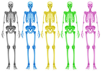 Coloured skeletons