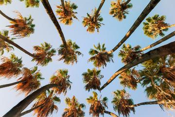 Palm tree at sunrise light.