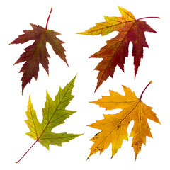 Isolated autumn leaves set
