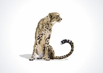 cheetahpic,logo,symbol, speedy, speed, savana, wild