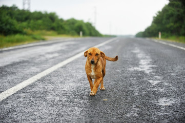 Stray dog on the road