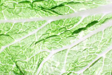 Green cabbage leaf background