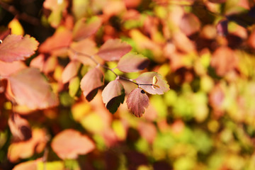 Autumn tree twigs